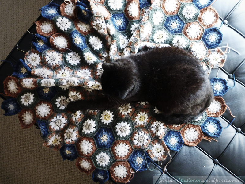 Felix's Acceptance of the Star Anise Blanket