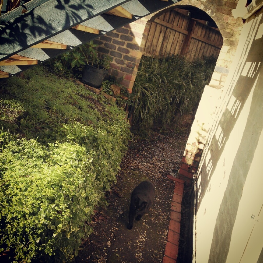 Meandering Garden Diary: The First Tour – Under The Stair Cat