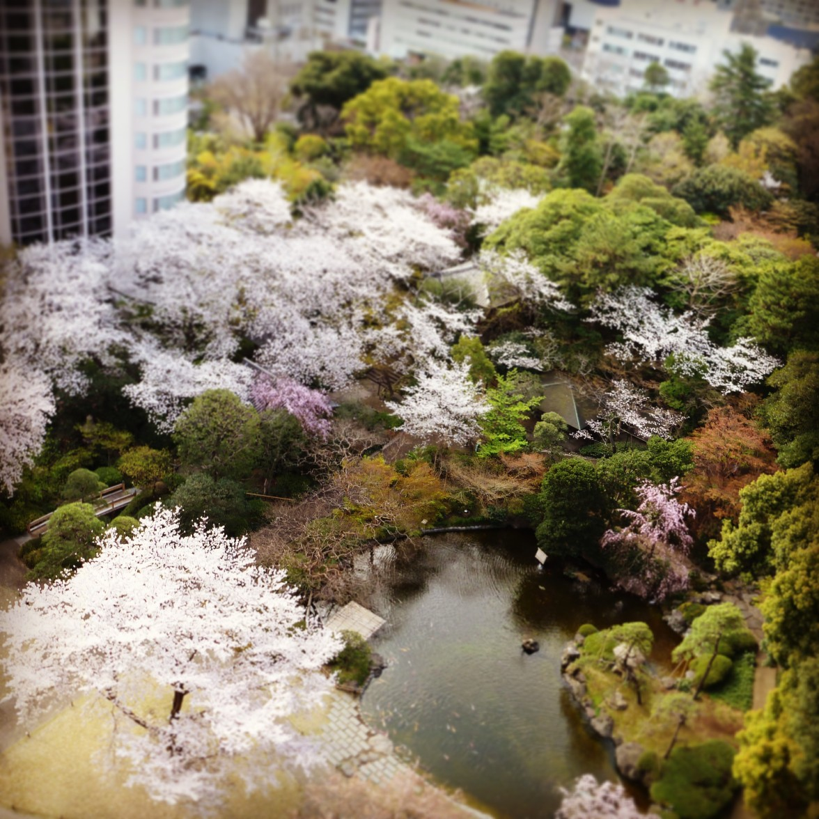 View from Prince hotel Takanawa, Tokyo Japan